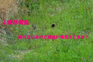 P1120450_sh02
